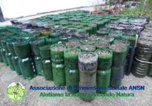 Vivaio_Associazione_ANSN_NEWS_www.ansn.it_Foto© Sante Cericola [2015] (3)