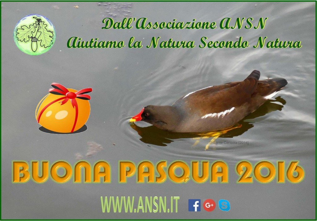 Buona Pasqua_www.ansn.it