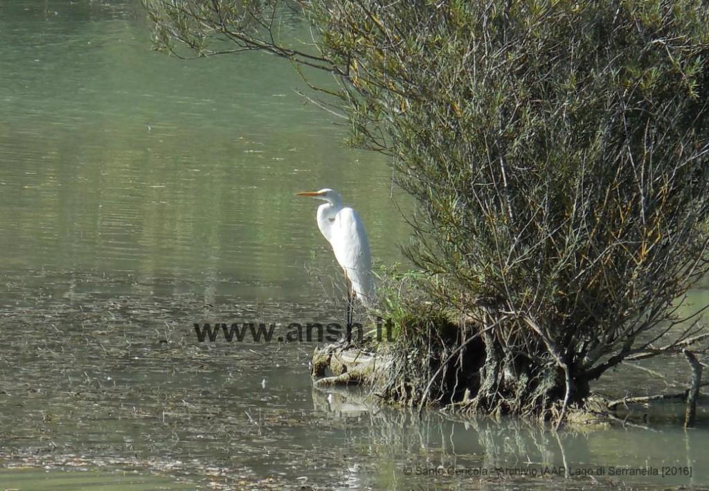 sante-cericola_archivio-iaap-lago-di-serranella-2016_www-ansn-it-2