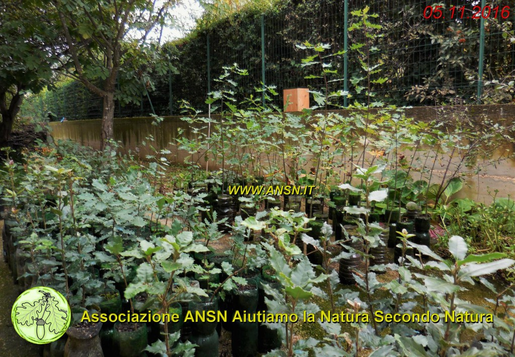 vivaiettosoci_ansn_2016_www-ansn-19